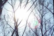 L'approccio olistico in psicoterapia (con audio dell'articolo)